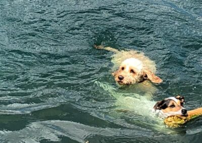 Posh Paws Petcare Dogs Swimming