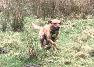 posh paws petcare dog in field yeadon