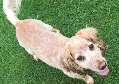 posh paws petcare dog in grass yeadon