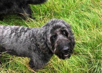 shaggy black dog Posh Paws Petcare Horsforth